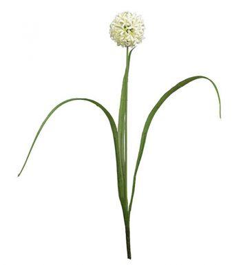 MP Allium 9656-10