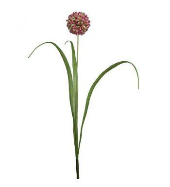 MP Allium 9656-40